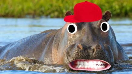 A hippo in a red cap