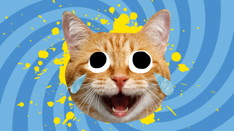 Laughing ginger cat in front of a blue background