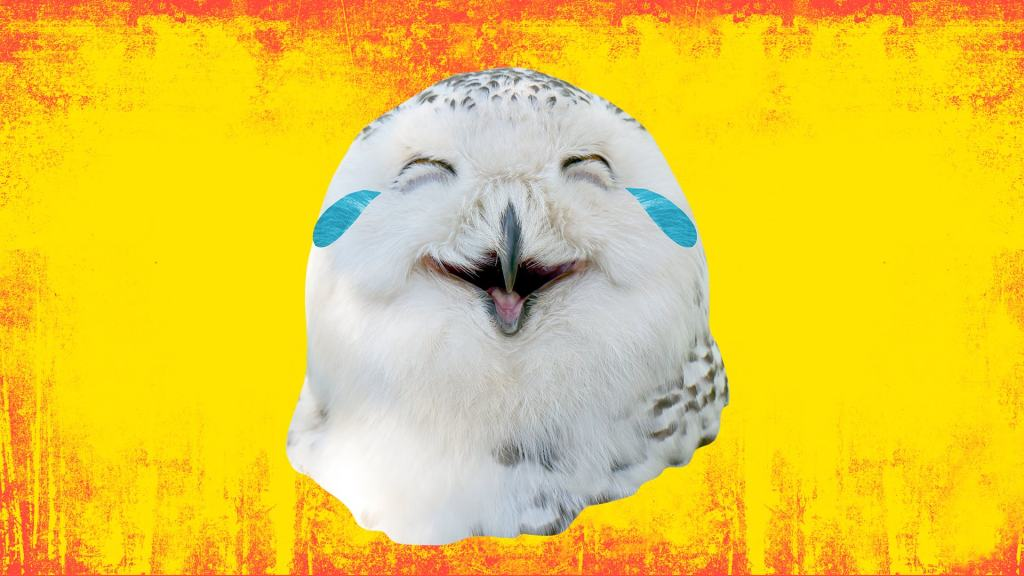 A laughing white owl in front of an orange and red background