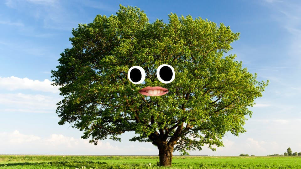 A smiling tree