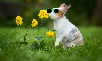 Rabbit in sunglasses