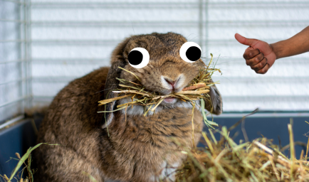 A rabbit eating some hay