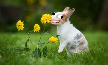 Rabbit smelling flowers