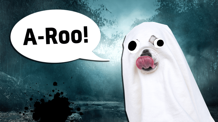 A dog dressed as a ghost