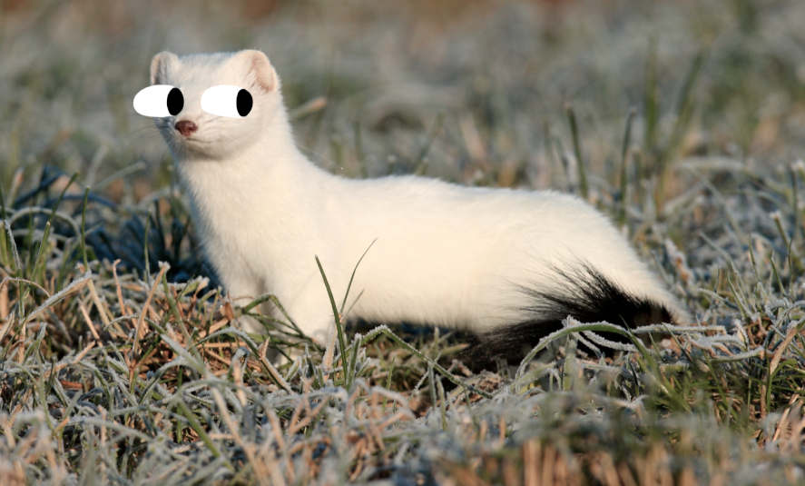 Image shows a long and thin, white rodent