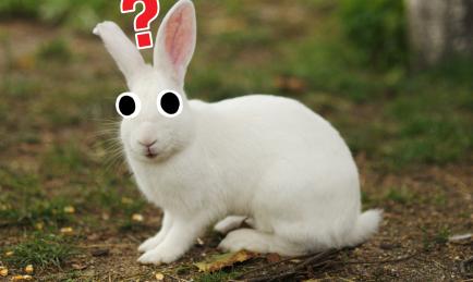 A big white rabbit
