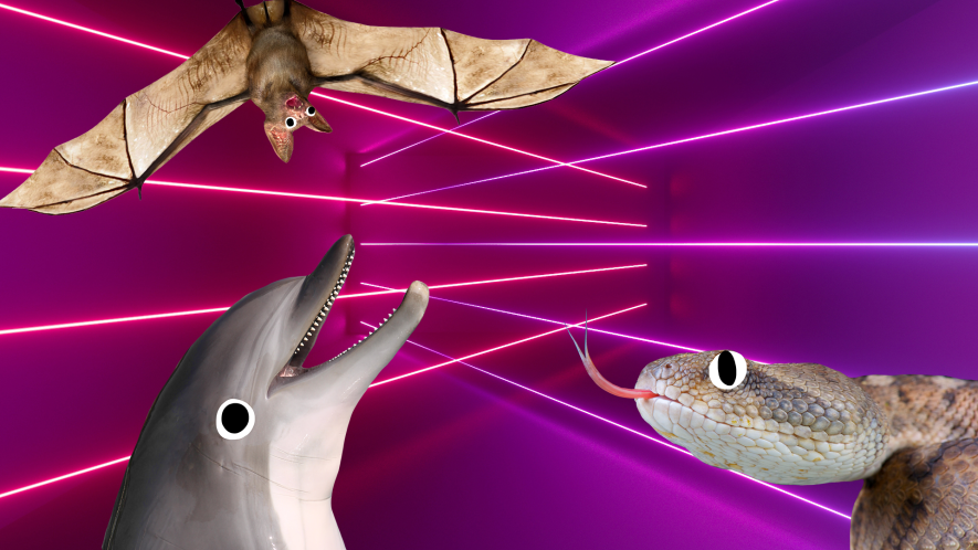 Bat, dolphin and snake on laser background