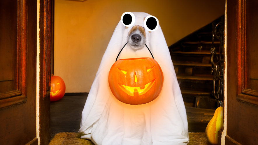 Dog dressed as ghost