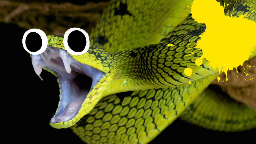 Snake with goggly eyes