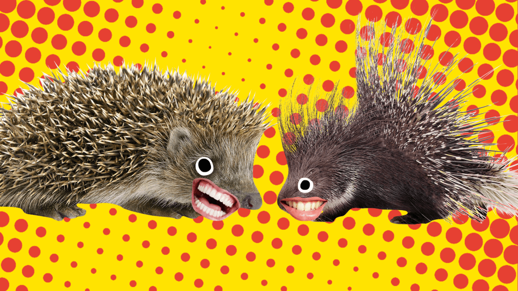 Two brown hedgehogs squaring up to each other