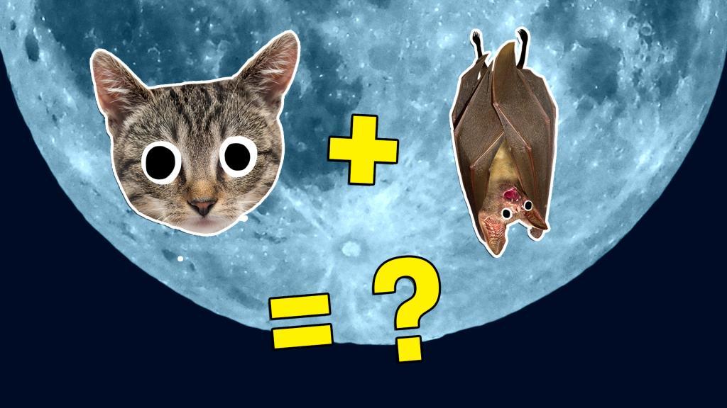 Cat + bat = what?