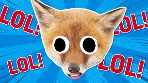 Fox Jokes