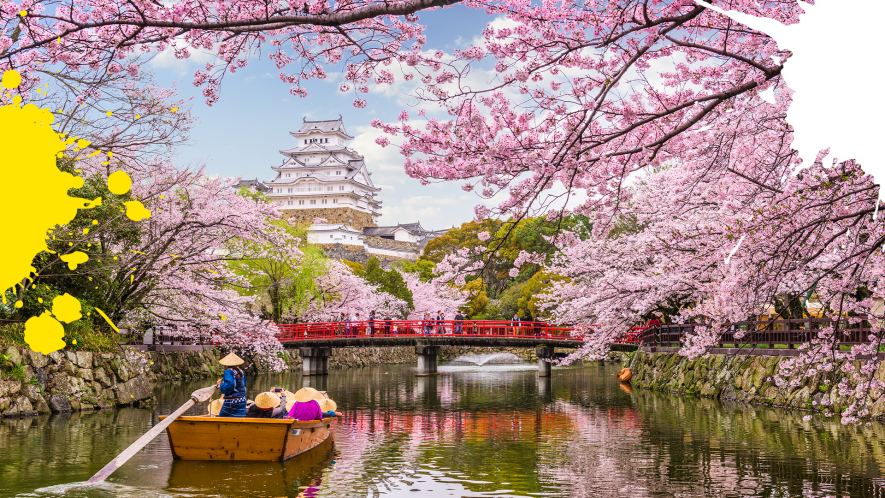 Japanese river with pink blossom trees