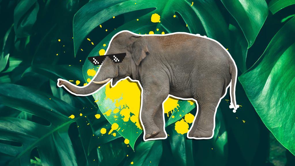 Elephant wearing sunglasses