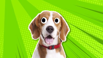 This is a beagle NOT an eagle