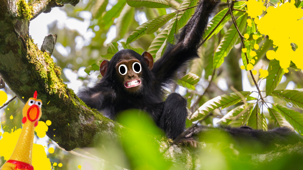 A chimp in a tree