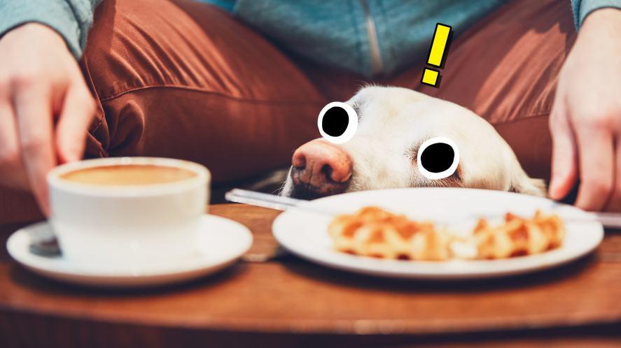 Dog peeking over coffee table