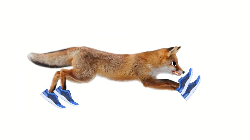 A fox running while wearing blue trainers