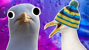 Seagulls jokes