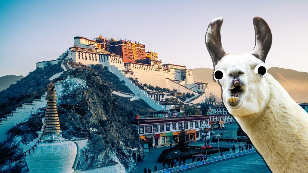 A llama visits the Potala Palace in Tibet