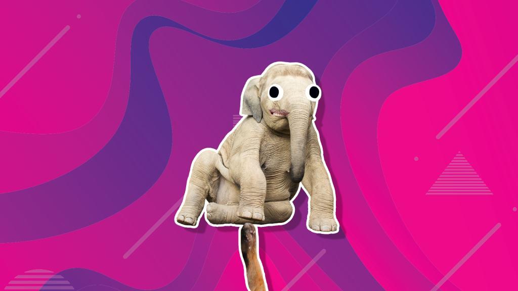 Baby elephant sitting on its side