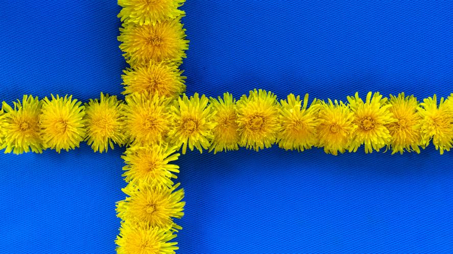 A Swedish flag made out of dandelions