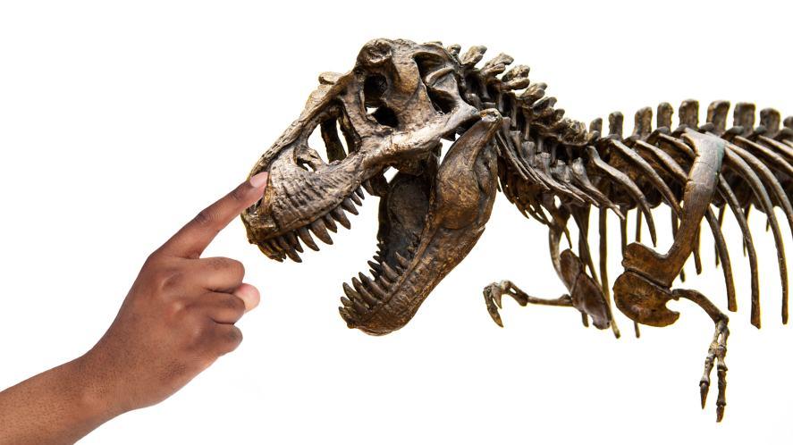 T-rrex skeleton