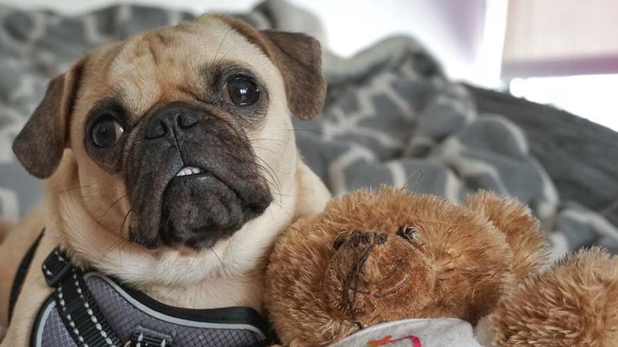 Frank with a teddy bear