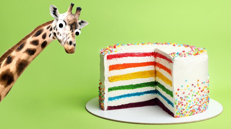 A giraffe with a rainbow cake