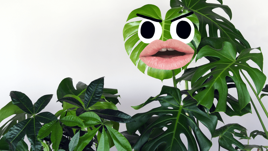 House plant with face
