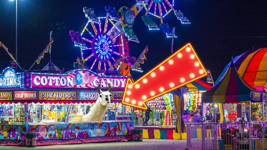 Fun fair with llama