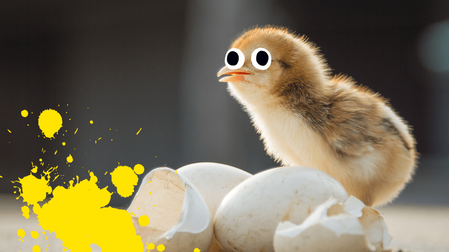 Newly hatched chick with eggshell