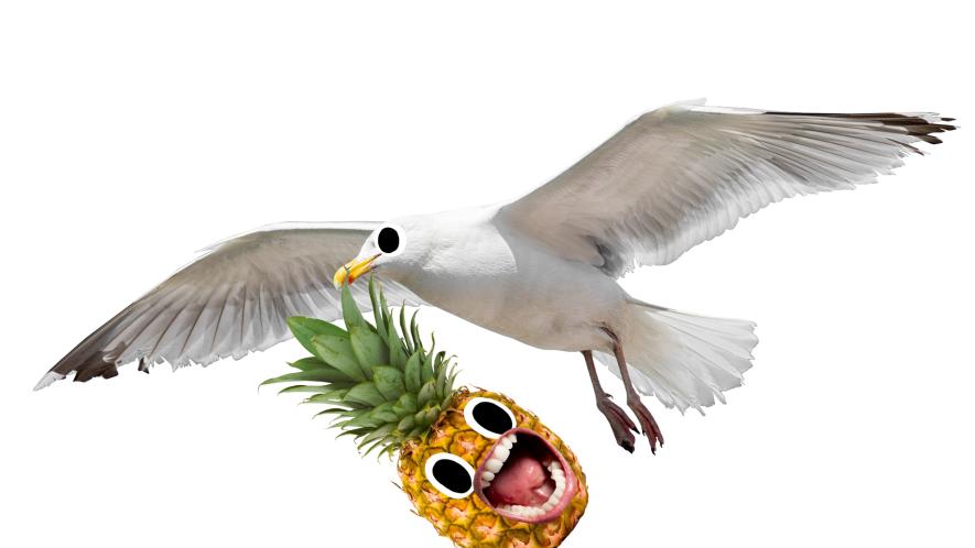 Seagull holding screaming pineapple in its beak