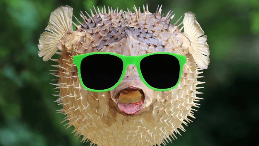 Pufferfish with sunglasses