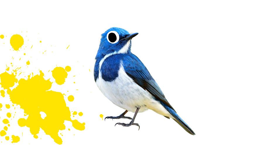 Blue bird with yellow splat