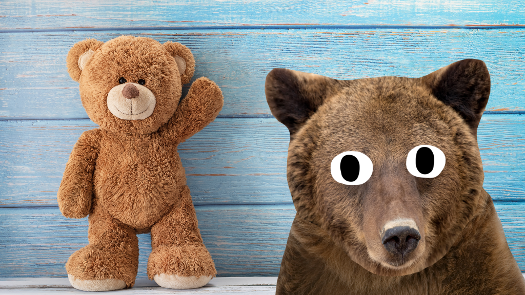 Teddy bear and real bear looking surprised