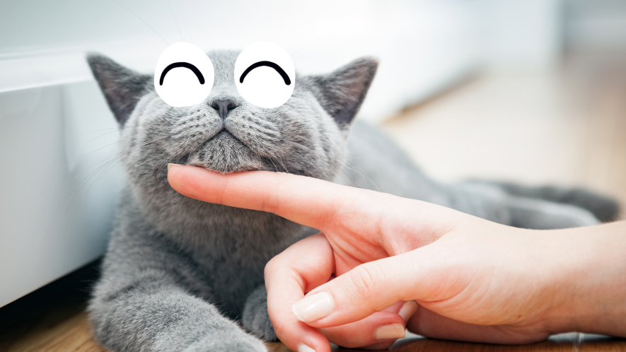 Grey cat being stroked