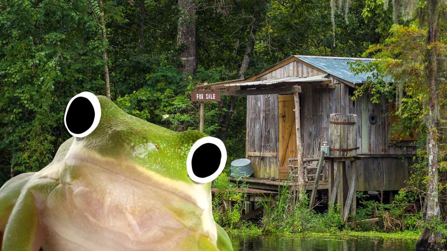 A frog in a swamp