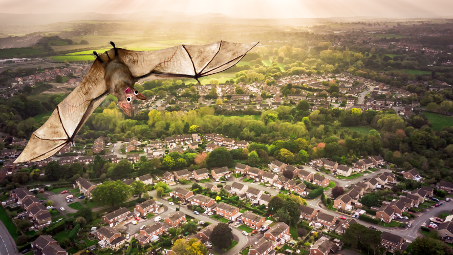 Aerial shot of English town with surprised looking bat