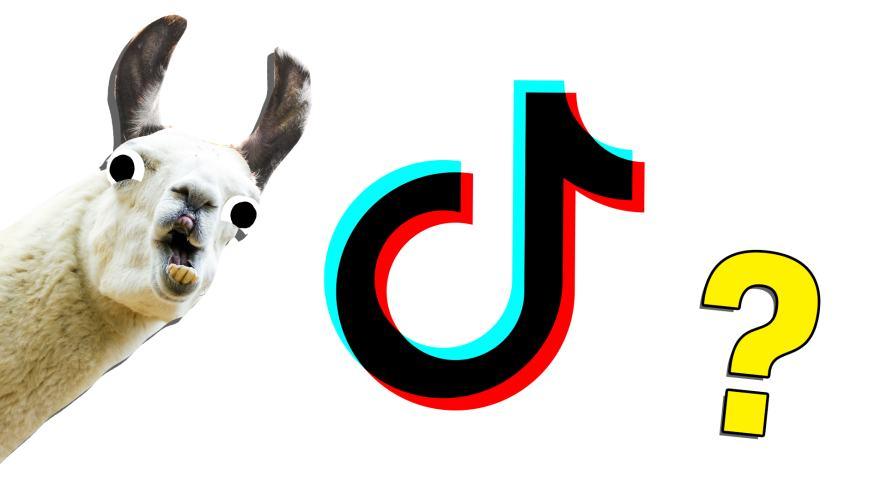 A llama laughs at the Tik Tok logo
