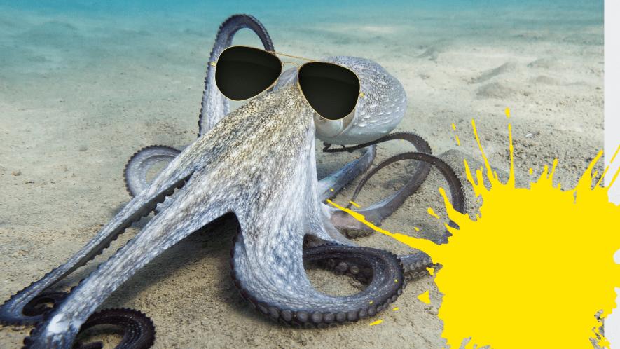 Octopus in sunglasses