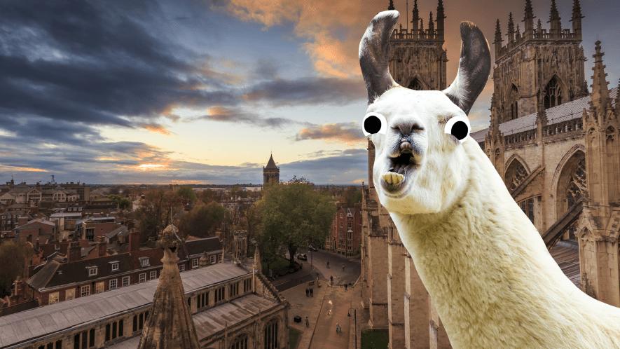 York with llama