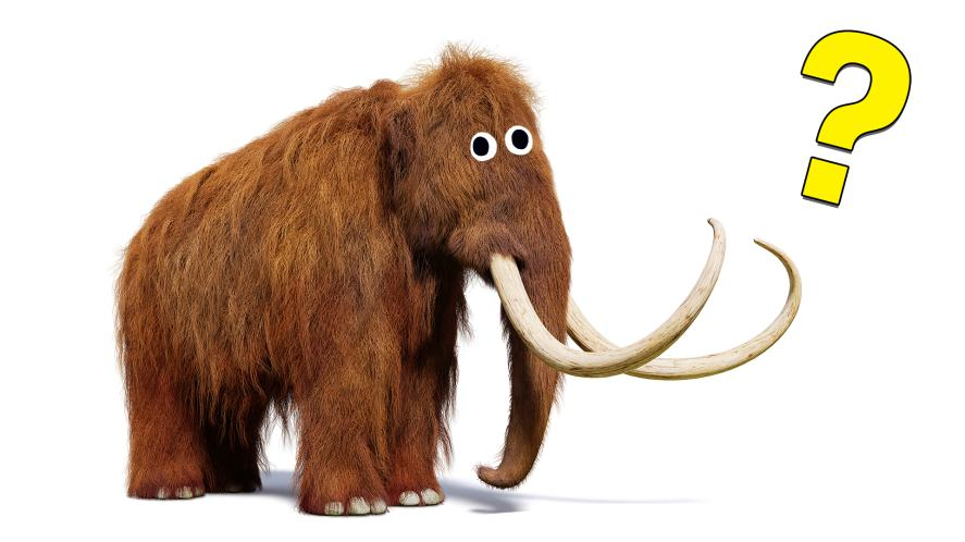 A wooly mammoth looks confused