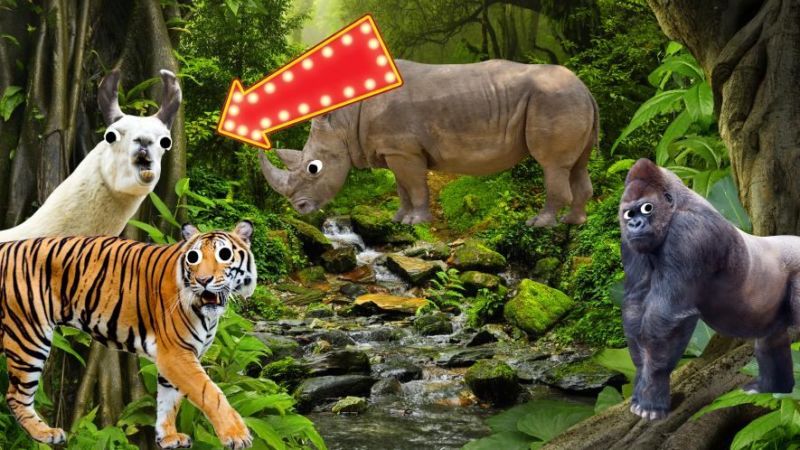 Jungle with animals and llama