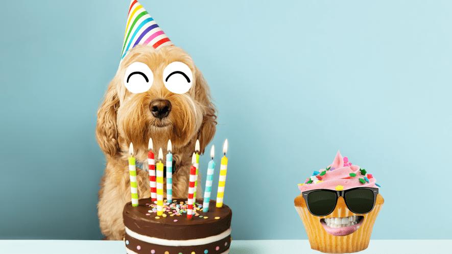 Dog and birthday cake and smiling cupcake