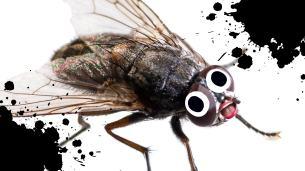 fly jokes