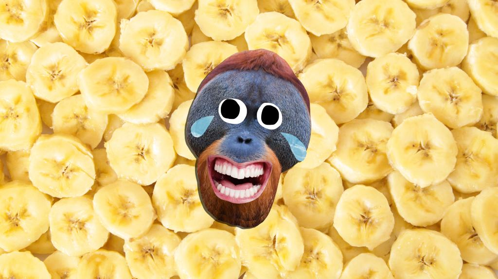 Laughing monkey in front of banana slices
