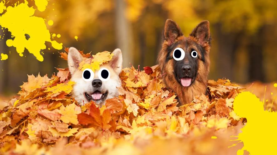 Two dogs in a pile of leaves