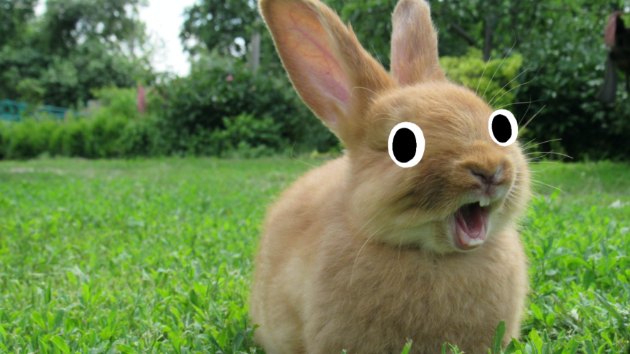 cute rabbit with googly eyes