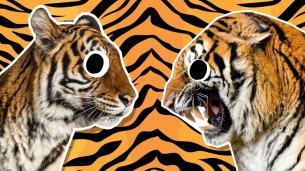 Tiger jokes